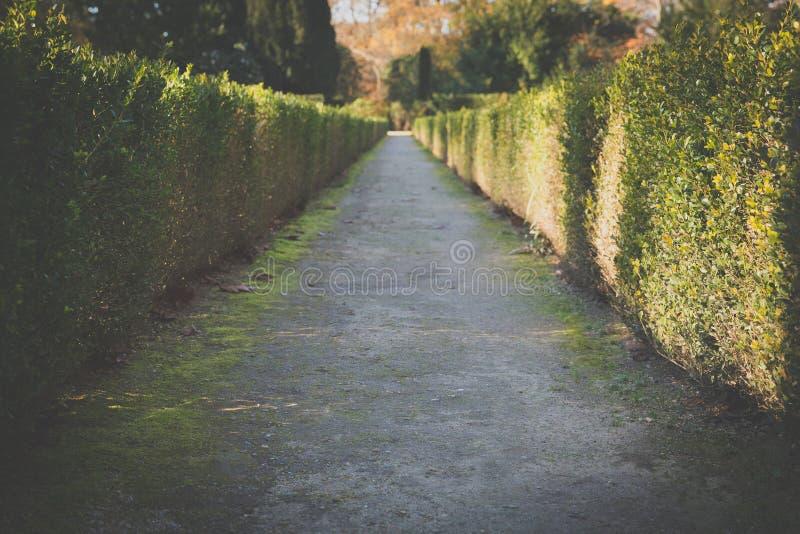 Ścieżka obrazy royalty free