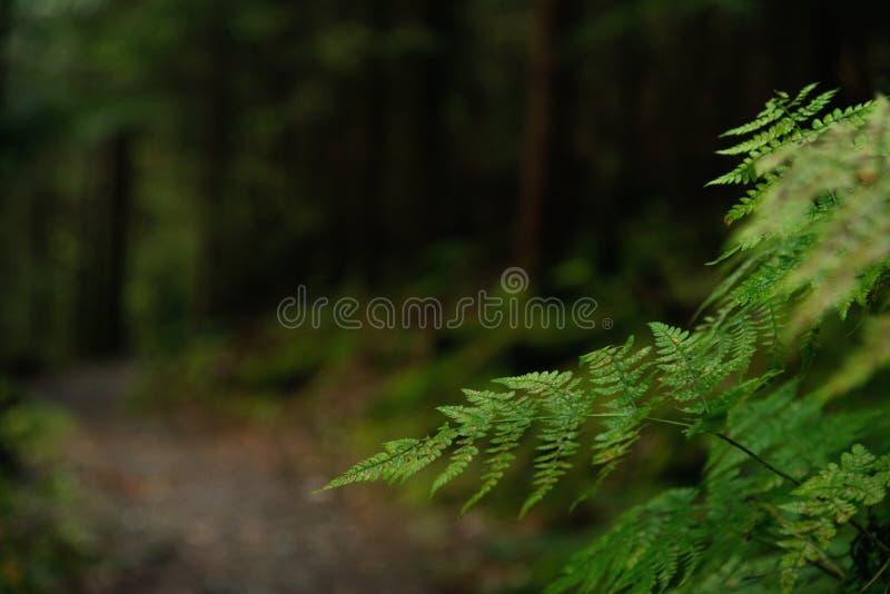 Ścieżka do ciemnego lasu fotografia royalty free