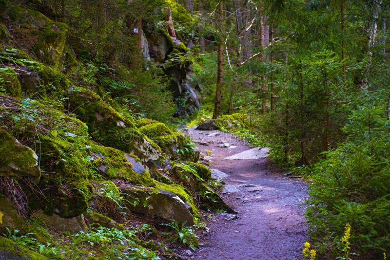 Ścieżka do lasu Tyrolu cztery obraz stock