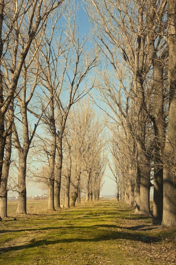 Ścieżka i drzewa obraz royalty free