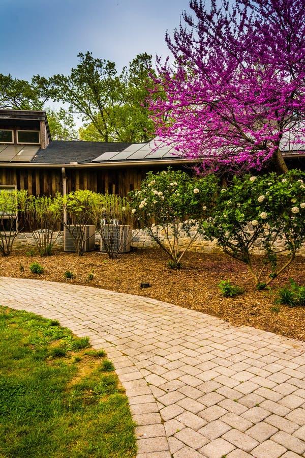 Ścieżka i redbud drzewo przy natury centrum w Wildwood parku, Harr obraz stock