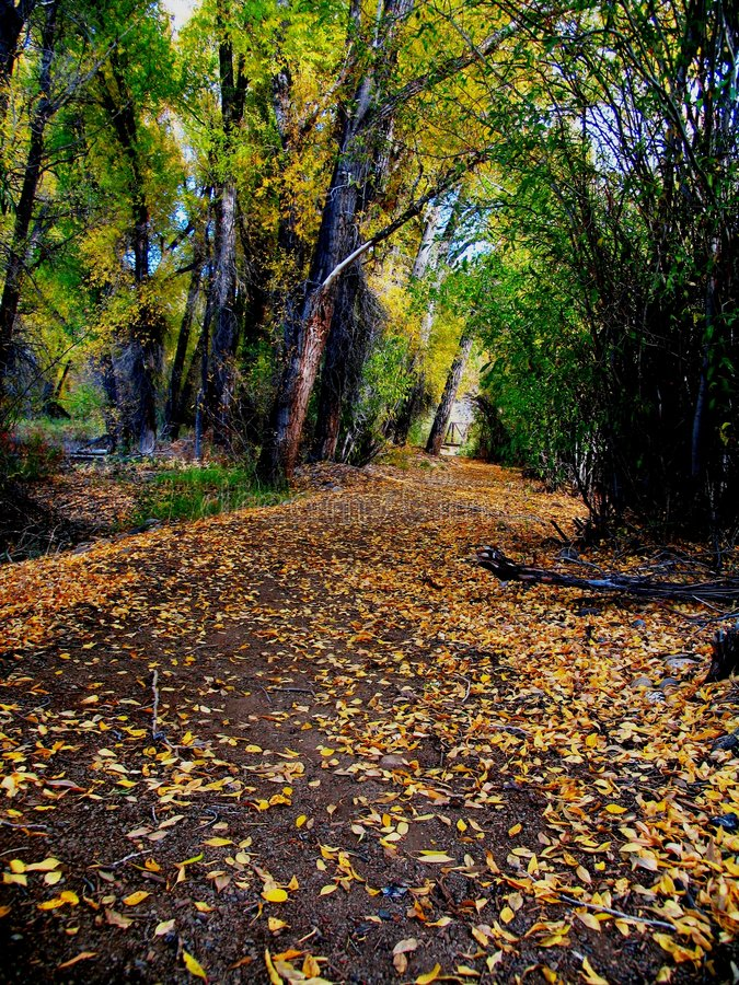 ścieżka Jesienią Zdjęcie Royalty Free