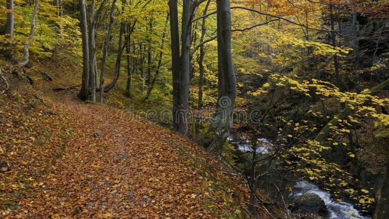 ścieżka jesienna zdjęcia royalty free