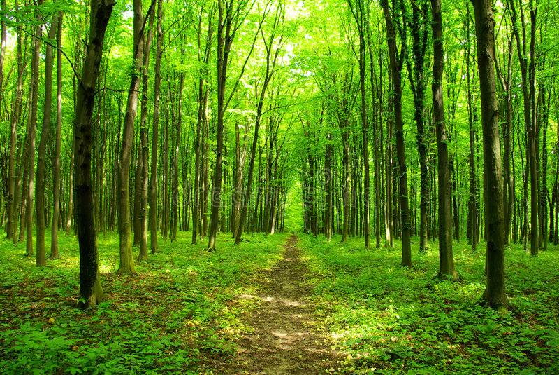 ścieżka leśna zdjęcia stock