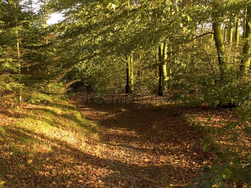 ścieżka leśna obraz royalty free