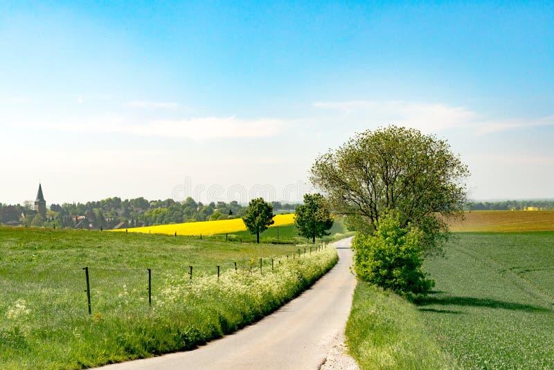 Ścieżka między żółtym gwałta polem i kwitnącymi łąkami zdjęcie royalty free