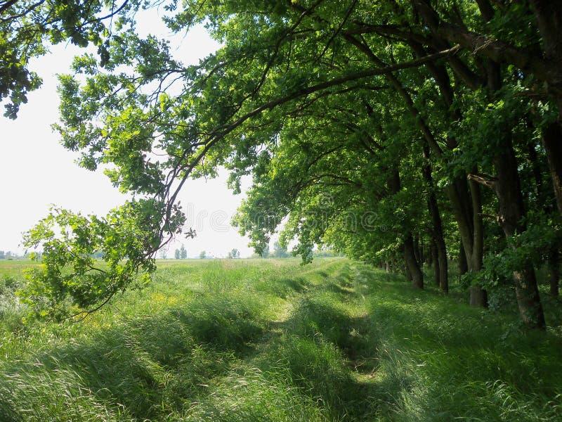 Ścieżka między lasem i polami obraz royalty free