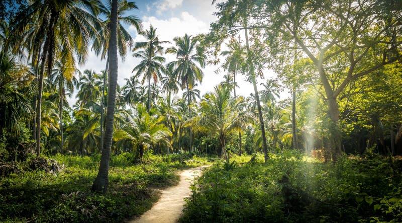 Ścieżka na drzewko palmowe lesie - Tayrona Naturalny park narodowy, Kolumbia fotografia stock