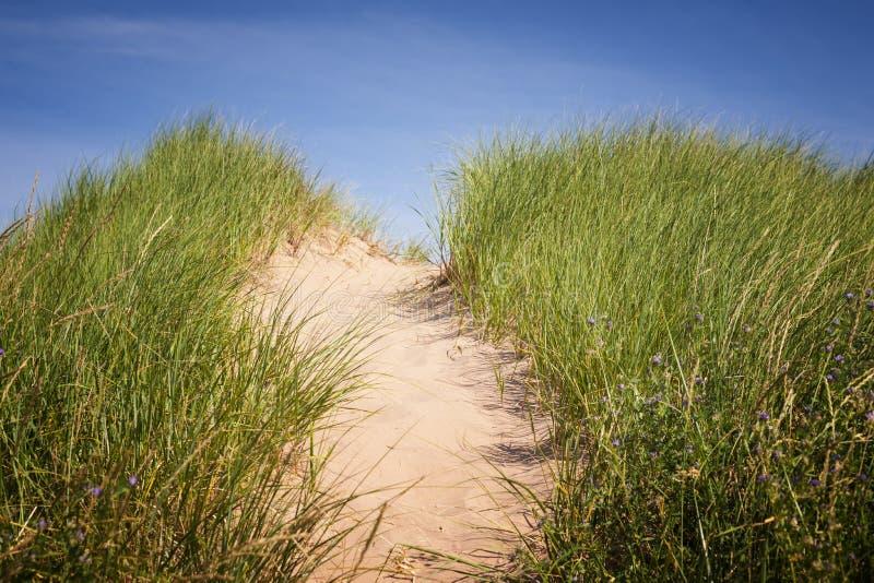 Ścieżka nad piasek diunami z trawą zdjęcia royalty free