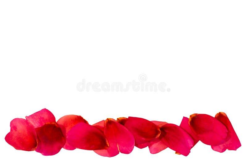 ścieżka płatki wzrastali czerwona róża zdjęcie royalty free