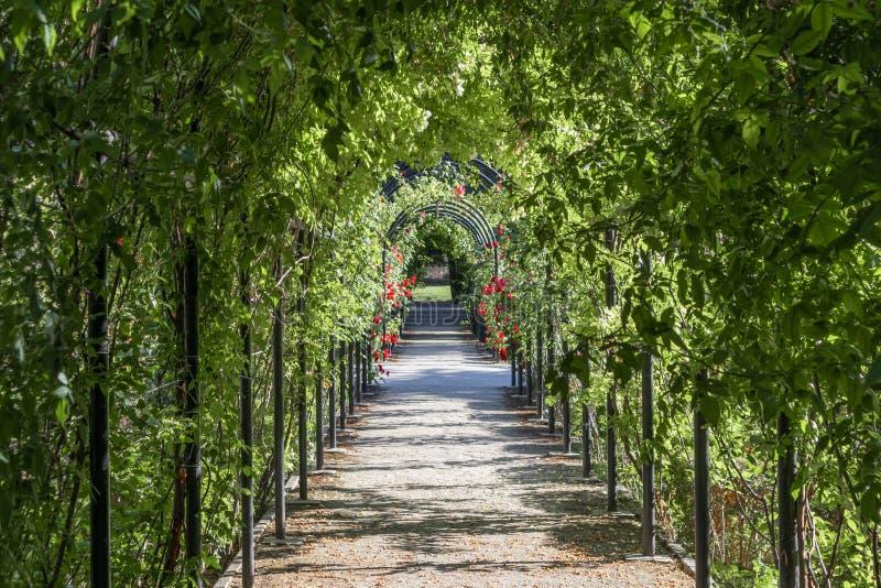 Ścieżka pełna roślinności w parku obraz stock