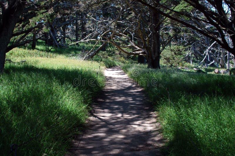 Download ścieżka piękności zdjęcie stock. Obraz złożonej z ulistnienie - 136270