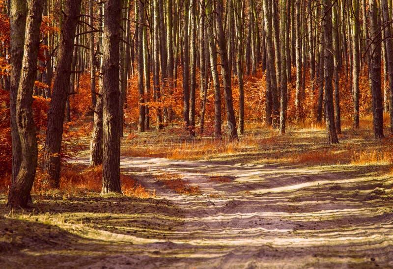 Ścieżka prowadząca w mieszanego jesień las z jaskrawymi pomarańczowymi liśćmi zdjęcie stock