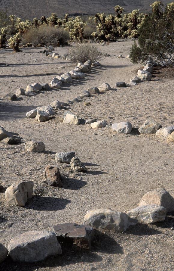 Ścieżka prowadzi grupa Cholla kaktus, Kalifornia zdjęcie royalty free