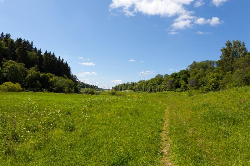Ścieżka przez łąki zdjęcia stock