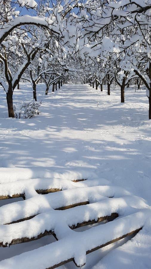 Ścieżka przez śnieg zakrywającego sadu fotografia stock