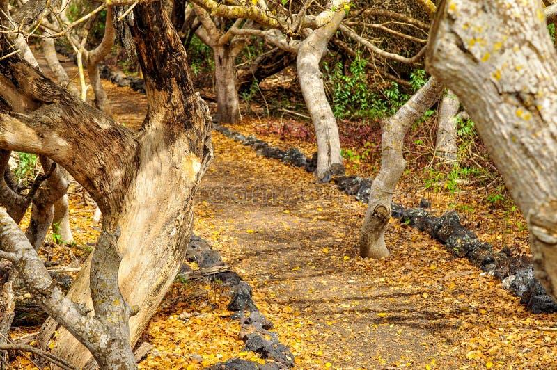 Ścieżka Przez drzew zdjęcia royalty free