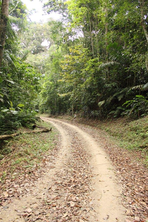 Ścieżka przez pustkowia zdjęcie stock