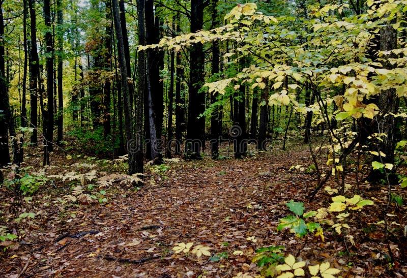 Ścieżka przez spadku lasu w Maine obraz royalty free