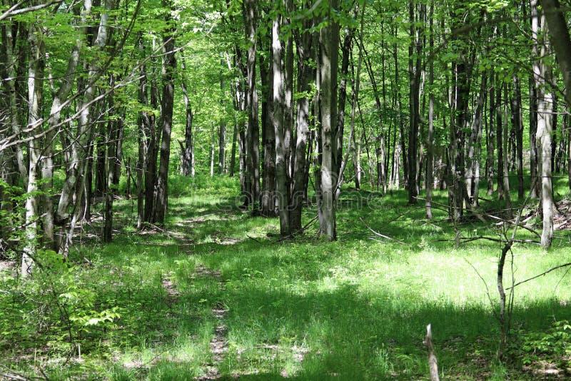Ścieżka przez zielonych drewien obrazy royalty free