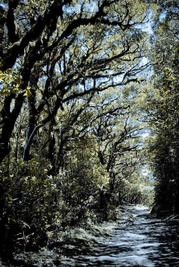 Ścieżka sceniczna otoczona drzewami w rezerwacie Monteverde, Kostaryka obraz royalty free