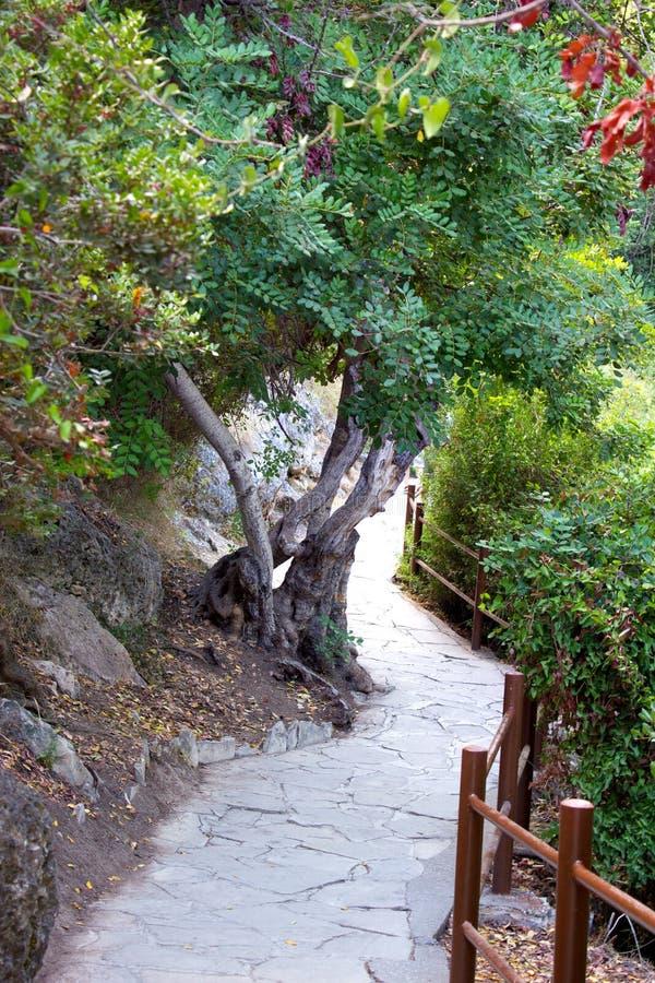 Ścieżka skąpania Aphrodite w Akamas, Cypr obraz stock