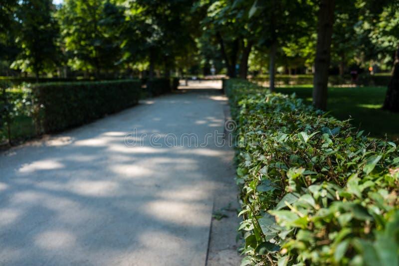 Ścieżka spacer park z zieloną roślinnością i drzewami obrazy royalty free