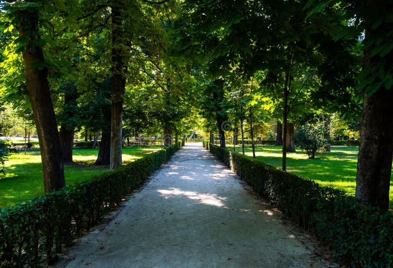 Ścieżka spacer park z zieloną roślinnością i drzewami zdjęcia royalty free