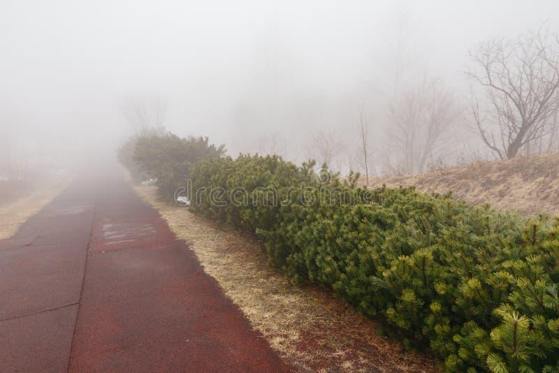 Ścieżka sposób z paprociowym krzakiem wzdłuż strony Japonia, który znika w mgle przy górą Usu w zimie w hokkaidu obrazy stock