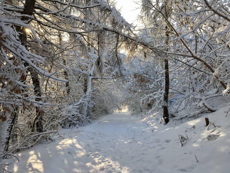 Ścieżka wśród śnieżnych drzew obraz stock