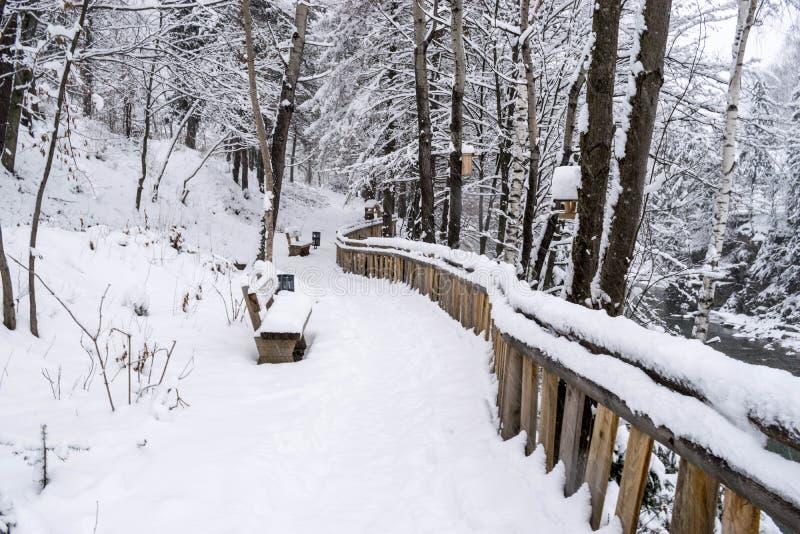 Ścieżka w śnieżnym parku fotografia royalty free
