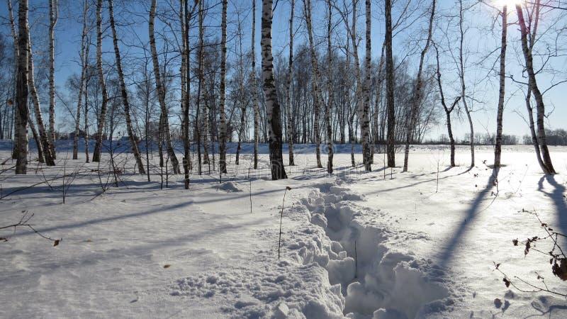 Ścieżka w śniegu fotografia stock