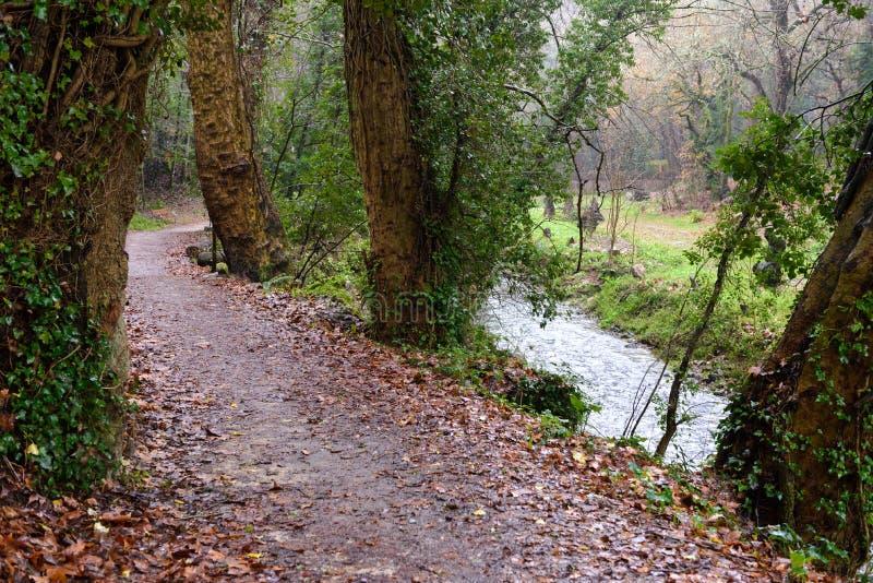 Ścieżka w dżdżystym jesień lesie obraz royalty free
