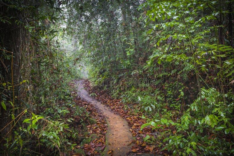 Ścieżka w dżungli Sinharaja tropikalny las deszczowy w Sri Lanka zdjęcia royalty free