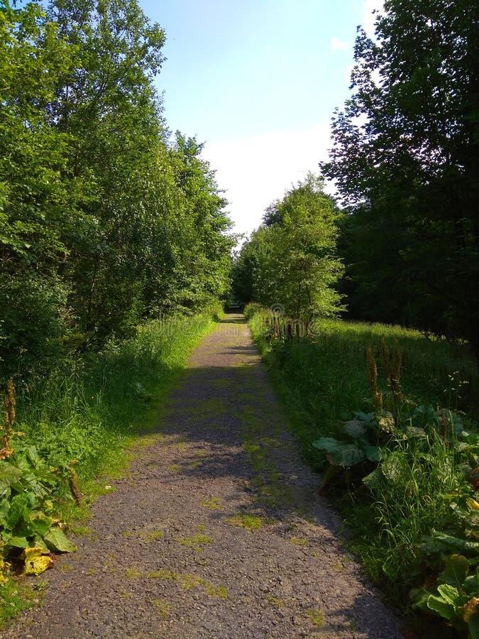 Ścieżka w decidous lesie zdjęcie royalty free