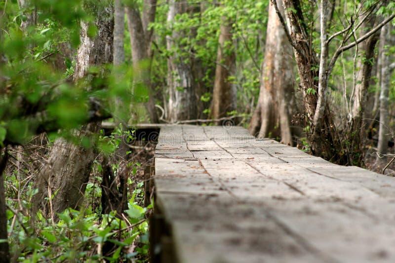 Ścieżka w drewna fotografia stock