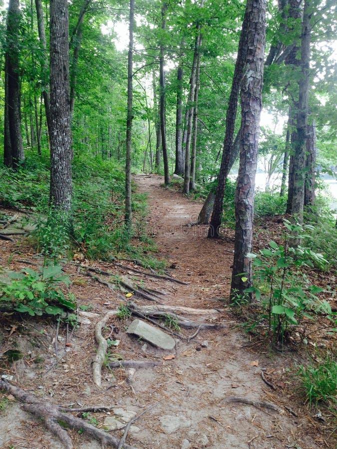 Ścieżka w drewnach obraz royalty free