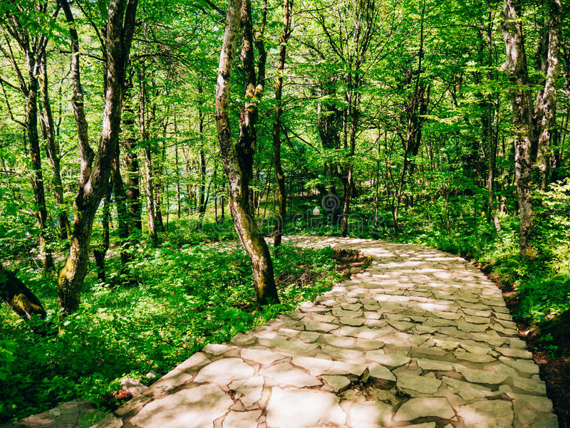 Ścieżka w drewnach Drogowy bieg przez lasu zdjęcia royalty free