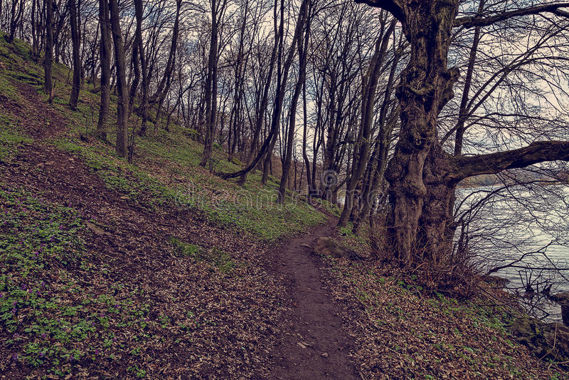 Ścieżka w halnym lesie wzdłuż rzeki zdjęcia stock