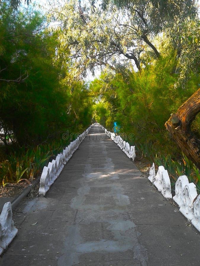 Ścieżka w iglastym parku zdjęcia royalty free
