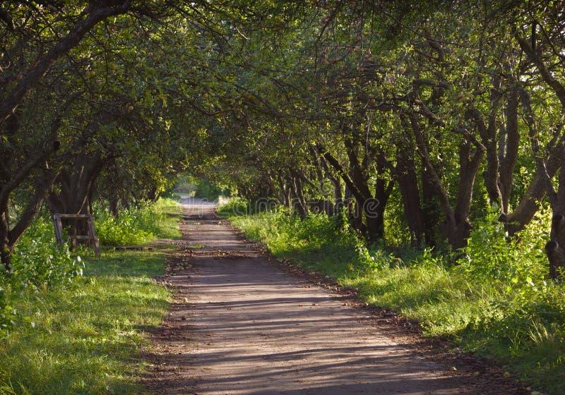Ścieżka w Jabłczanym sadzie obraz royalty free