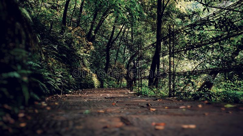 Ścieżka w lesie zdjęcia royalty free