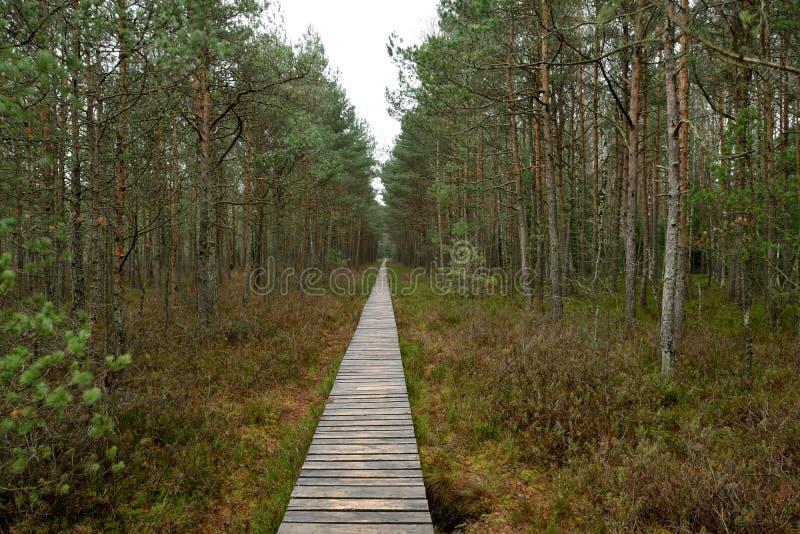 Ścieżka w Naturalnym Parku zdjęcie stock