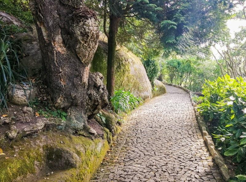 Ścieżka w ogródzie zdjęcie stock
