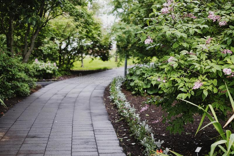 Ścieżka W ogródzie botanicznym fotografia royalty free