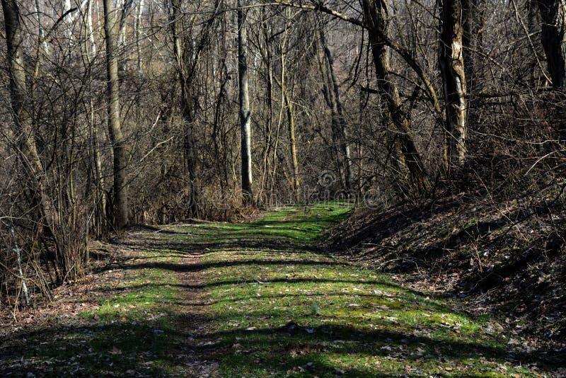 Ścieżka w opóźnionej zimie zdjęcie stock