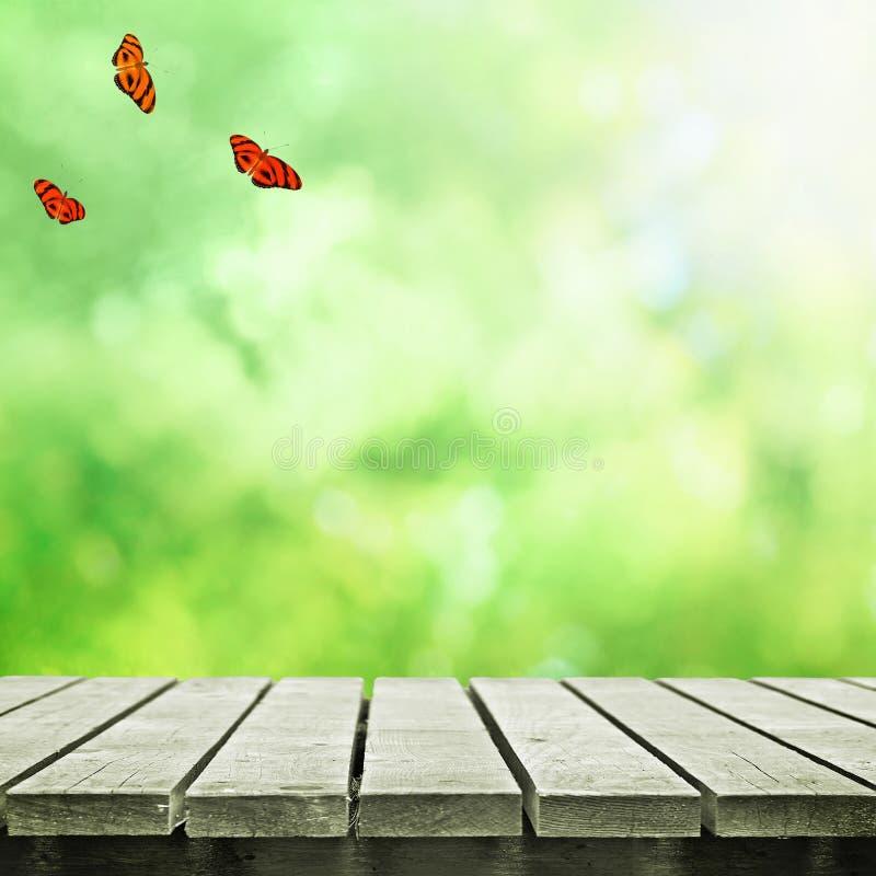 Ścieżka w polu i motylach obraz royalty free