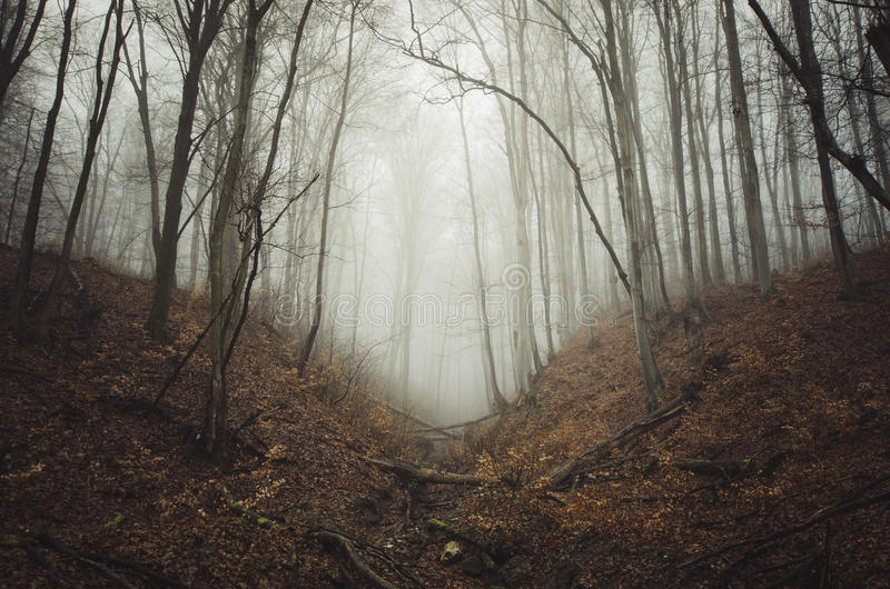 Ścieżka w tajemniczym nawiedzającym lesie z mgłą zdjęcia royalty free