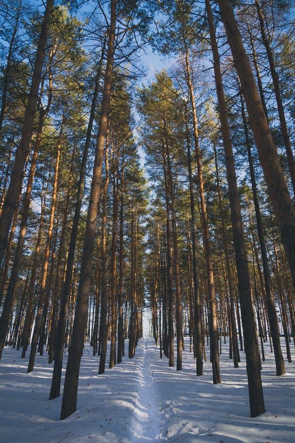 Ścieżka w zima lesie obrazy stock