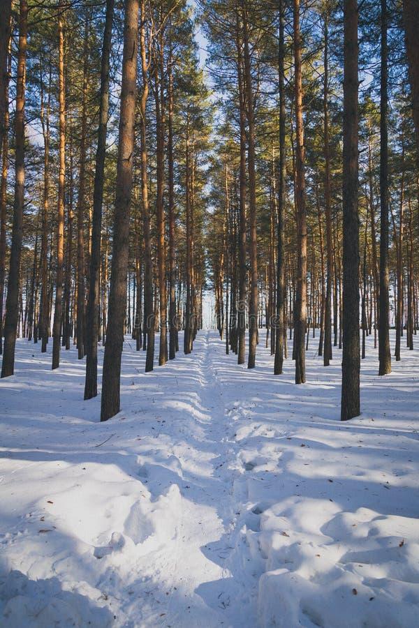Ścieżka w zima lesie obraz stock